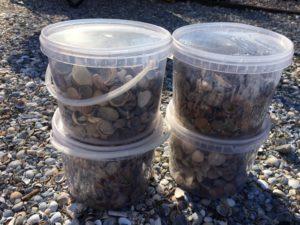 gesorteerde schone schelpen in emmertje 2,5liter