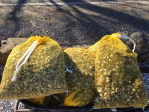 schelpen in zakje 10 kg
